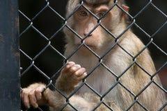 Mono en la jaula Fotos de archivo