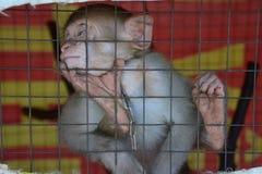 Mono en la jaula Fotos de archivo libres de regalías