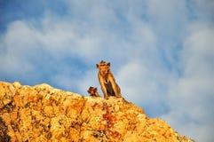Mono en la montaña Foto de archivo