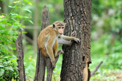 Mono en la naturaleza viva imagen de archivo