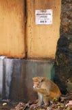 Mono en la pila de la basura Imagen de archivo libre de regalías