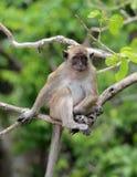 Mono en la playa Tailandia del mono Imagen de archivo
