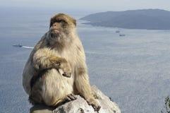 Mono en la roca Foto de archivo libre de regalías