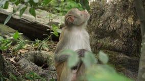 Mono en las selvas salvajes de Asia almacen de video