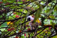Mono en los árboles Fotos de archivo
