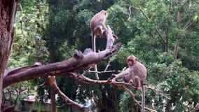 Mono en naturaleza Imagen de archivo