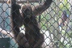 Mono en parque zoológico Fotos de archivo