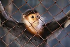 Mono en pensamientos Imagenes de archivo