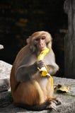 Mono en templo nepalés Imagen de archivo libre de regalías