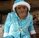 Mono en traje de la Navidad Foto de archivo libre de regalías