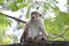 Mono en un árbol Imágenes de archivo libres de regalías