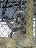 Mono en un parque zoológico imágenes de archivo libres de regalías