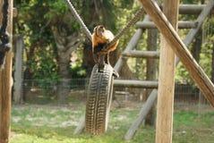Mono en un parque zoológico Imagen de archivo libre de regalías