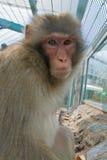 Mono en un parque zoológico Imagenes de archivo