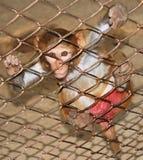 Mono en una jaula Imagen de archivo