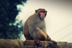 Mono en una pared Imagenes de archivo