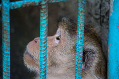 Mono enjaulado Foto de archivo libre de regalías