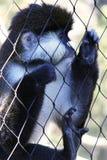 Mono enjaulado Fotos de archivo libres de regalías