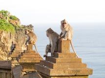 Mono (fascicularis del Macaca) Fotografía de archivo