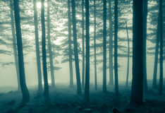 Mono foggy trees Royalty Free Stock Photo