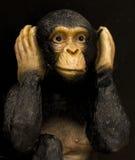 Mono icónico Foto de archivo libre de regalías