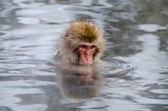 Mono japonés Imagen de archivo