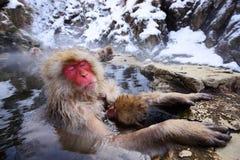 Mono japonés de la nieve Imagen de archivo libre de regalías