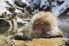 Mono japonés de la nieve Foto de archivo