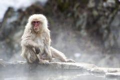 Mono japonés de la nieve Imagen de archivo