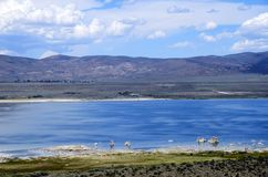Mono jezioro krajobraz, usa Obrazy Royalty Free