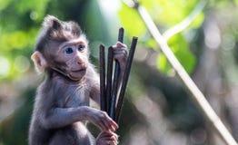 Mono joven Fotos de archivo