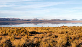 Mono lago Fotografía de archivo