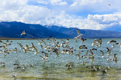 Mono lago California Foto de archivo libre de regalías