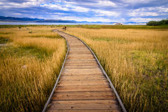 Mono Lake Catwalk. A catwalk leading to Mono Lake (Ca Royalty Free Stock Image