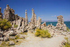 Mono Lake coral Stock Photo