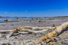 Mono Lake Shore and Tufa Formations Stock Photography