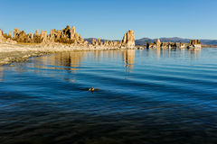 Mono Lake tufa formations at sunrise Stock Photography