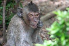 Mono lindo Fotografía de archivo libre de regalías