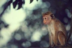 Mono lindo del bebé Imagen de archivo