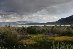 Mono linea della costa del lago immagine stock