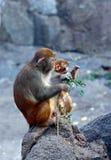 Mono-madre y niño Fotografía de archivo