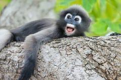 Mono muy solo Fotografía de archivo libre de regalías