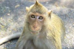 Mono necesitado Imagen de archivo libre de regalías