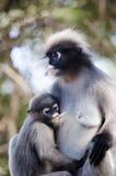 Mono oscuro de la hoja Foto de archivo