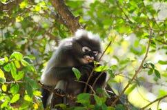 Mono oscuro de la hoja Fotografía de archivo