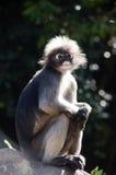 Mono oscuro de la hoja Fotos de archivo