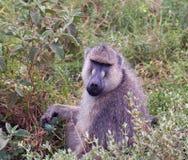 mono Perro-hecho frente Fotos de archivo