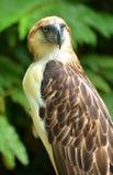 Mono que come el águila fotografía de archivo