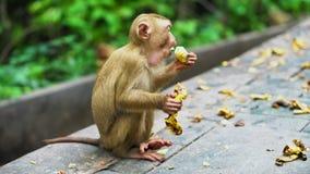 Mono que come el plátano almacen de video