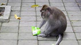 Mono que come en Bali metrajes